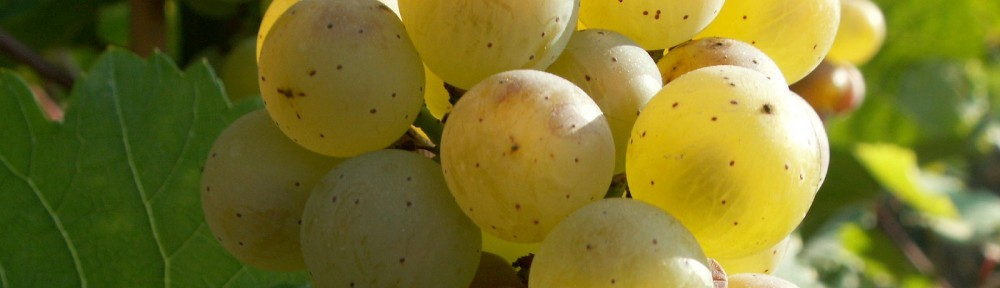 Wine- & Guesthouse Binz-Meyer